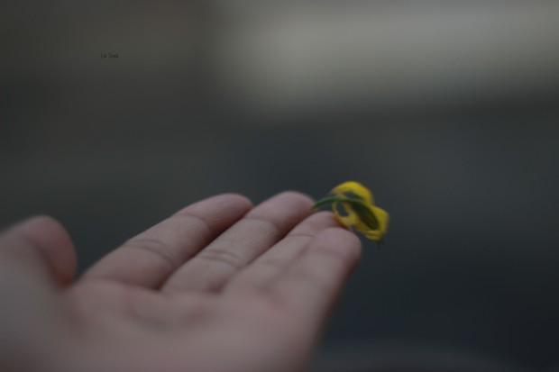 flozinha voando 4